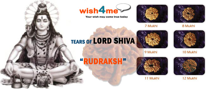 Rudraksha Tears of Lord Shiva