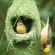 चिड़िया का घोंसला