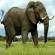 हाथी और छह अंधे व्यक्ति