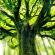 तीन पेड़ों की कथा